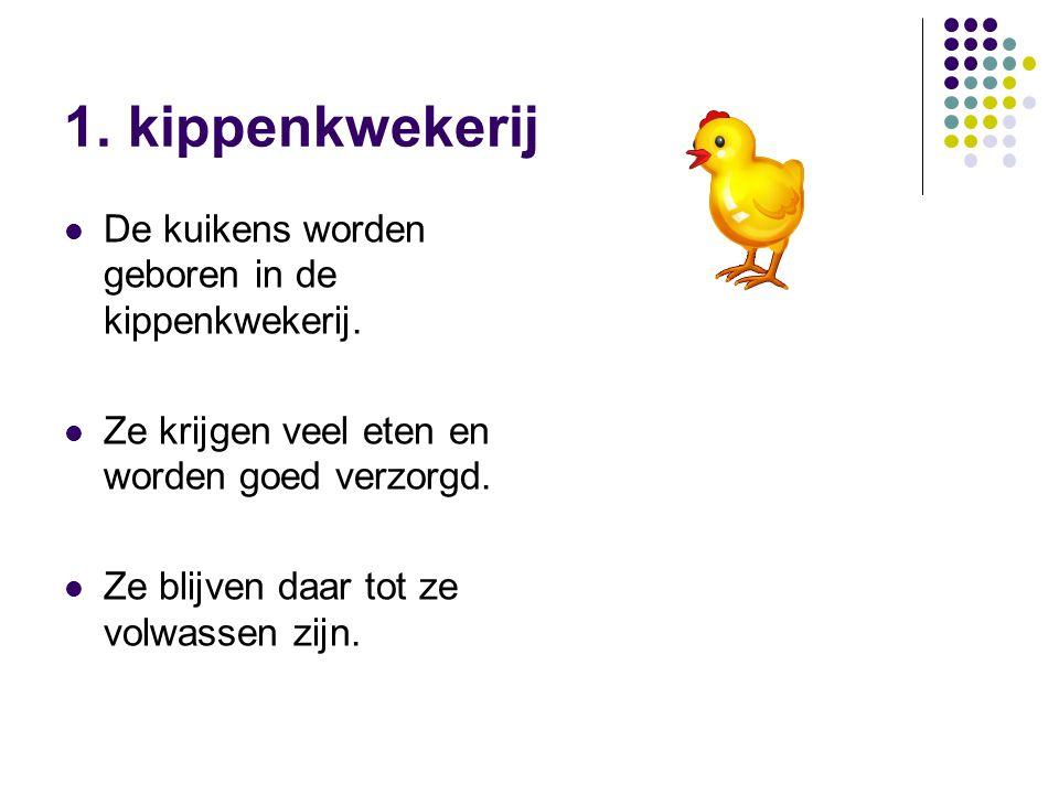 1. kippenkwekerij De kuikens worden geboren in de kippenkwekerij.