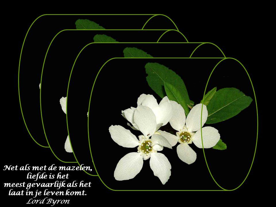 Net als met de mazelen, liefde is het meest gevaarlijk als het laat in je leven komt. Lord Byron