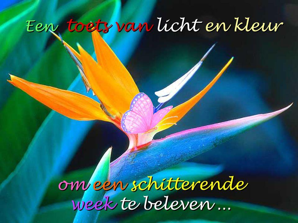 Een toets van licht en kleur om een schitterende week te beleven...