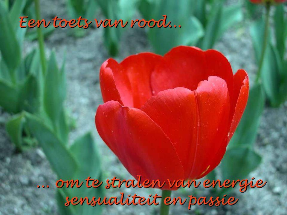 Een toets van rood...Een toets van rood...... om te stralen van energie sensualiteit en passie...
