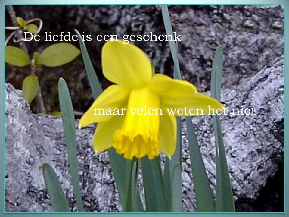 HET MOOISTE GESCHENK Muziek: Nana Mouskouri Roses love Sunshine
