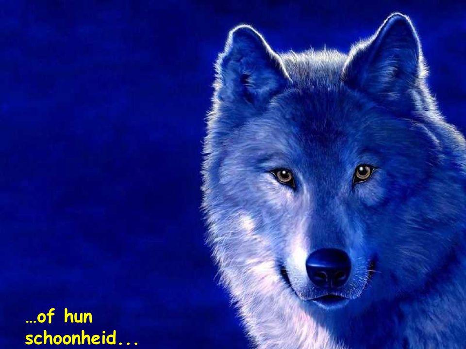 Ik bewonder de edelheid der dieren van het woud