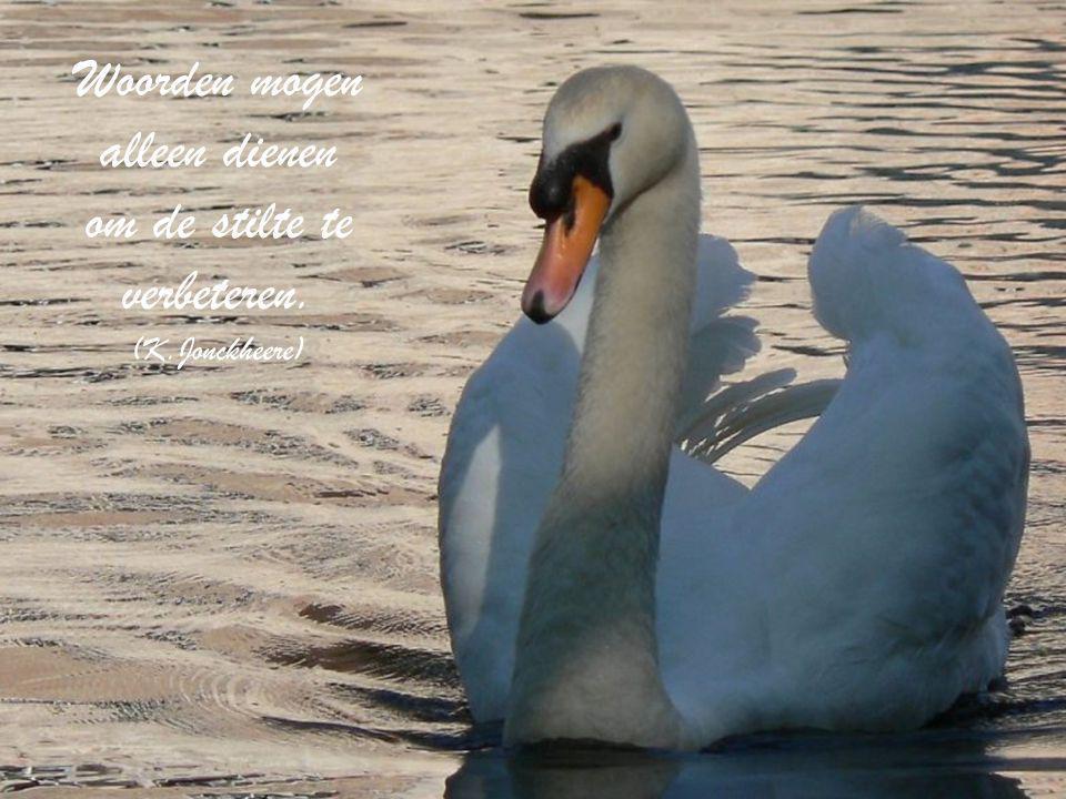 """Foto: Martine Verhaeghe Weathercam Brugge """"De stilte"""" """" Leer u aan de stilte laven, waar het leven u geleidt.Zij is uwe veil'ge haven, want zij is de"""