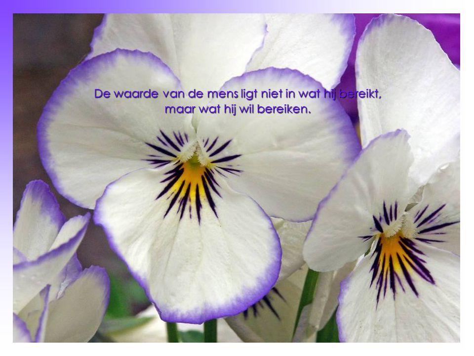 De waarde van de mens ligt niet in wat hij bereikt, maar wat hij wil bereiken.
