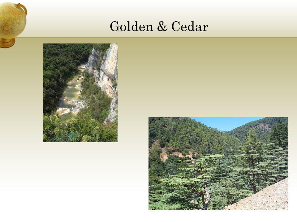 Golden & Cedar