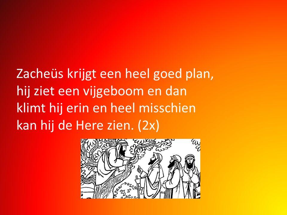 Zacheüs krijgt een heel goed plan, hij ziet een vijgeboom en dan klimt hij erin en heel misschien kan hij de Here zien. (2x)