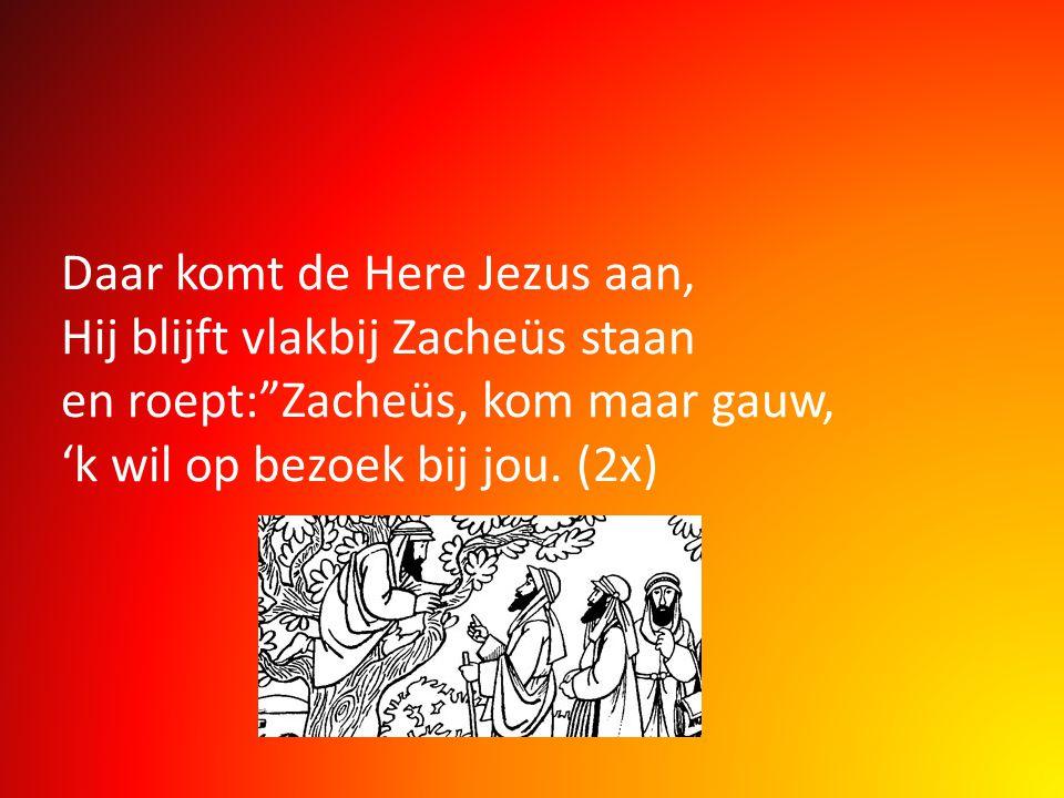 """Daar komt de Here Jezus aan, Hij blijft vlakbij Zacheüs staan en roept:""""Zacheüs, kom maar gauw, 'k wil op bezoek bij jou. (2x)"""