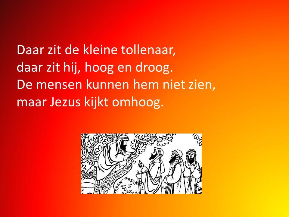 Daar zit de kleine tollenaar, daar zit hij, hoog en droog. De mensen kunnen hem niet zien, maar Jezus kijkt omhoog.