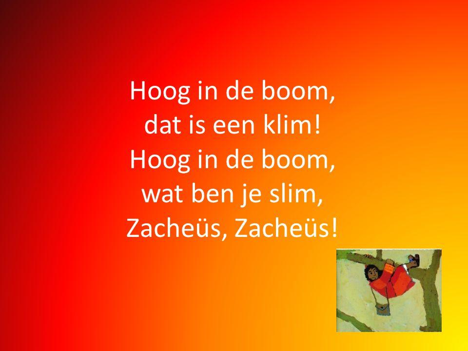 Hoog in de boom, dat is een klim! Hoog in de boom, wat ben je slim, Zacheüs, Zacheüs!