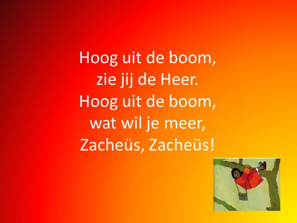 Hoog uit de boom, zie jij de Heer. Hoog uit de boom, wat wil je meer, Zacheüs, Zacheüs!