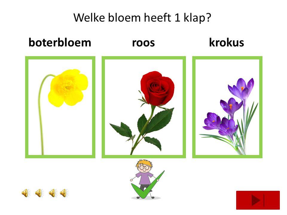 Welke bloem heeft 3 klappen? blauwe druifklaproosnarcis