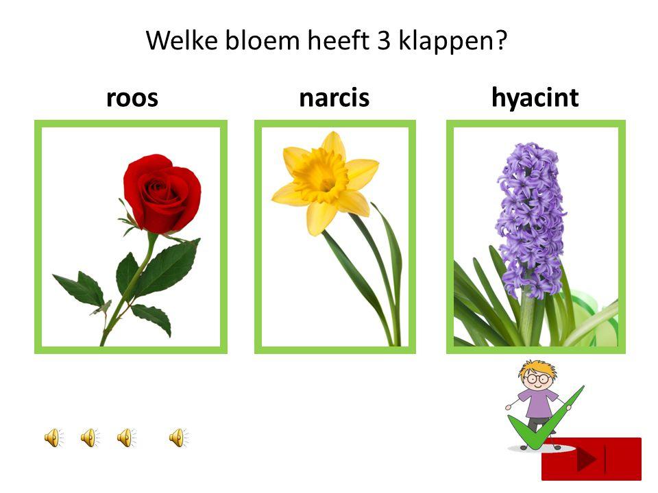 Welke bloem heeft 1 klap? boterbloemrooskrokus