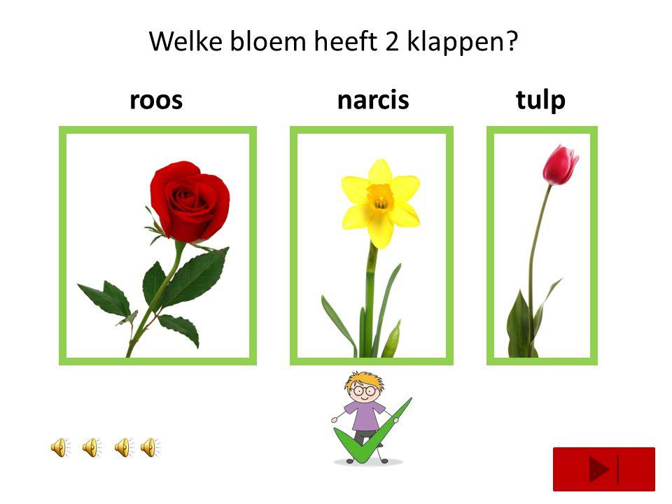 Welke bloem heeft 3 klappen? roosnarcishyacint