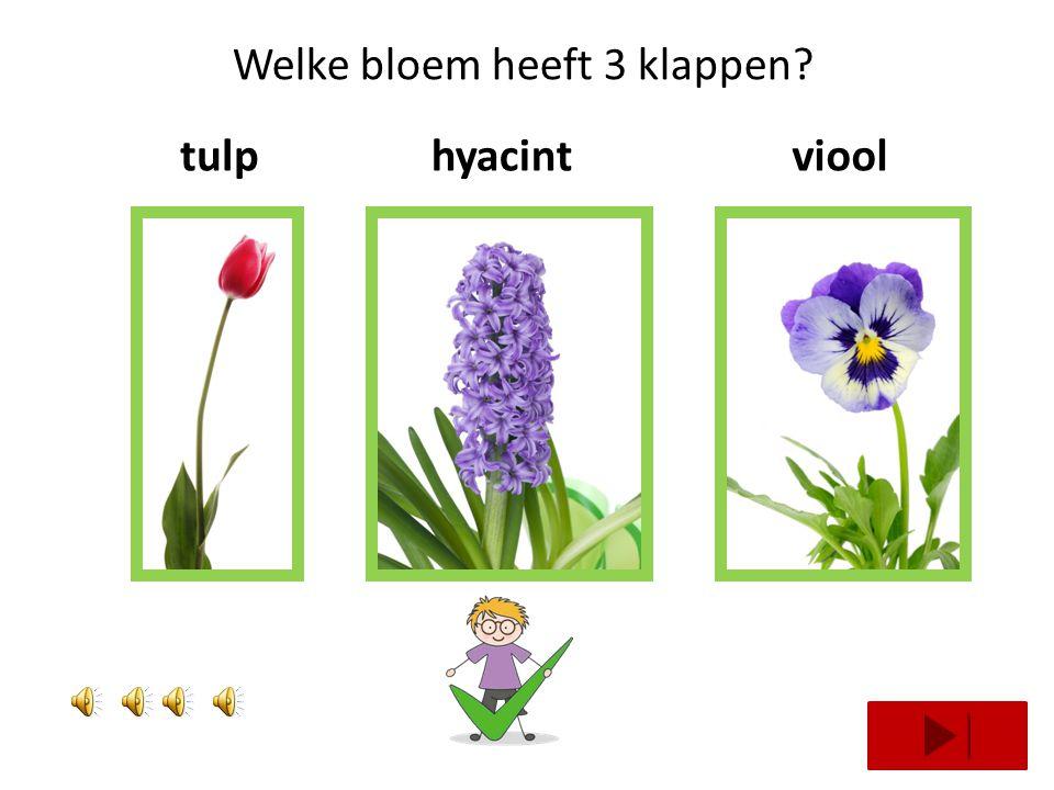 Welke bloem heeft 1 klap? tulpzonnebloemmargriet