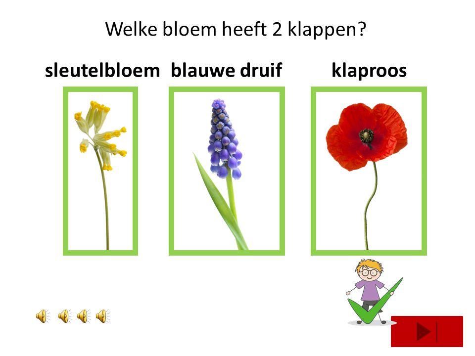 Welke bloem heeft 2 klappen? margrietzonnebloemkrokus