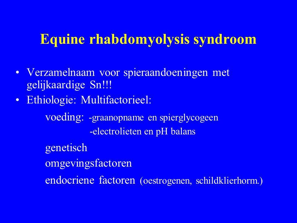Equine rhabdomyolysis syndroom Verzamelnaam voor spieraandoeningen met gelijkaardige Sn!!.