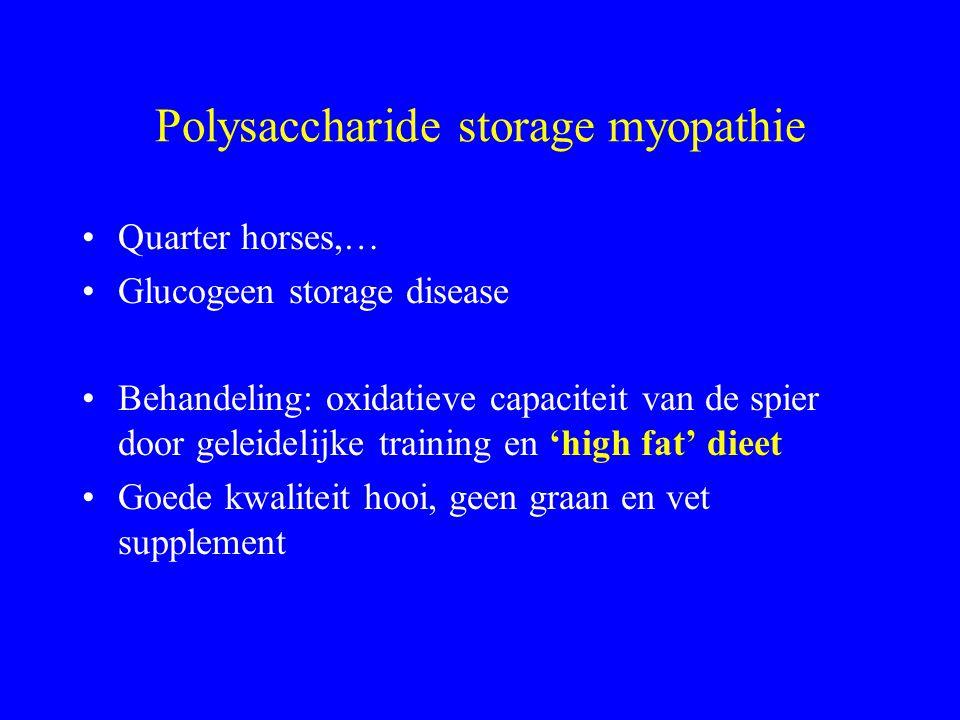 Polysaccharide storage myopathie Quarter horses,… Glucogeen storage disease Behandeling: oxidatieve capaciteit van de spier door geleidelijke training en 'high fat' dieet Goede kwaliteit hooi, geen graan en vet supplement