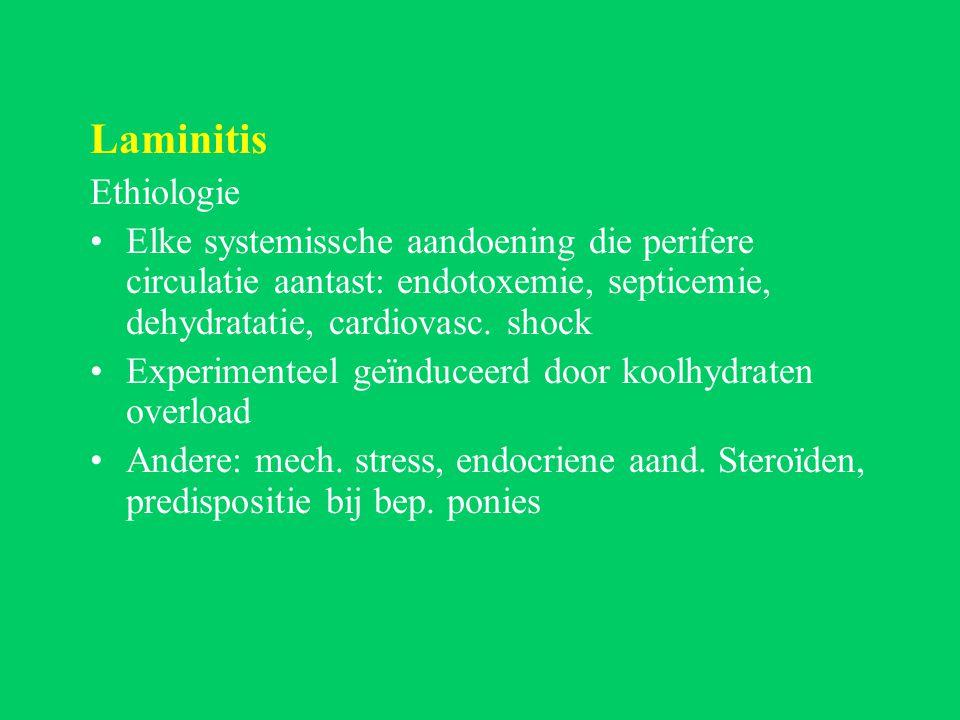 Laminitis Ethiologie Elke systemissche aandoening die perifere circulatie aantast: endotoxemie, septicemie, dehydratatie, cardiovasc.
