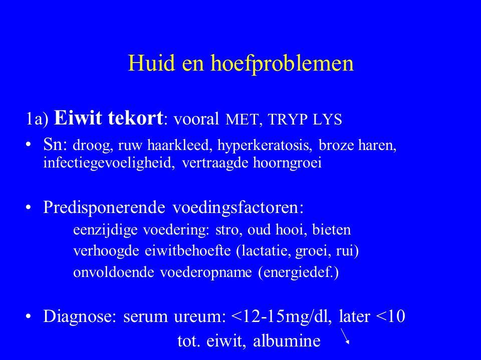 Huid en hoefproblemen 1a) Eiwit tekort : vooral MET, TRYP LYS Sn: droog, ruw haarkleed, hyperkeratosis, broze haren, infectiegevoeligheid, vertraagde hoorngroei Predisponerende voedingsfactoren: eenzijdige voedering: stro, oud hooi, bieten verhoogde eiwitbehoefte (lactatie, groei, rui) onvoldoende voederopname (energiedef.) Diagnose: serum ureum: <12-15mg/dl, later <10 tot.