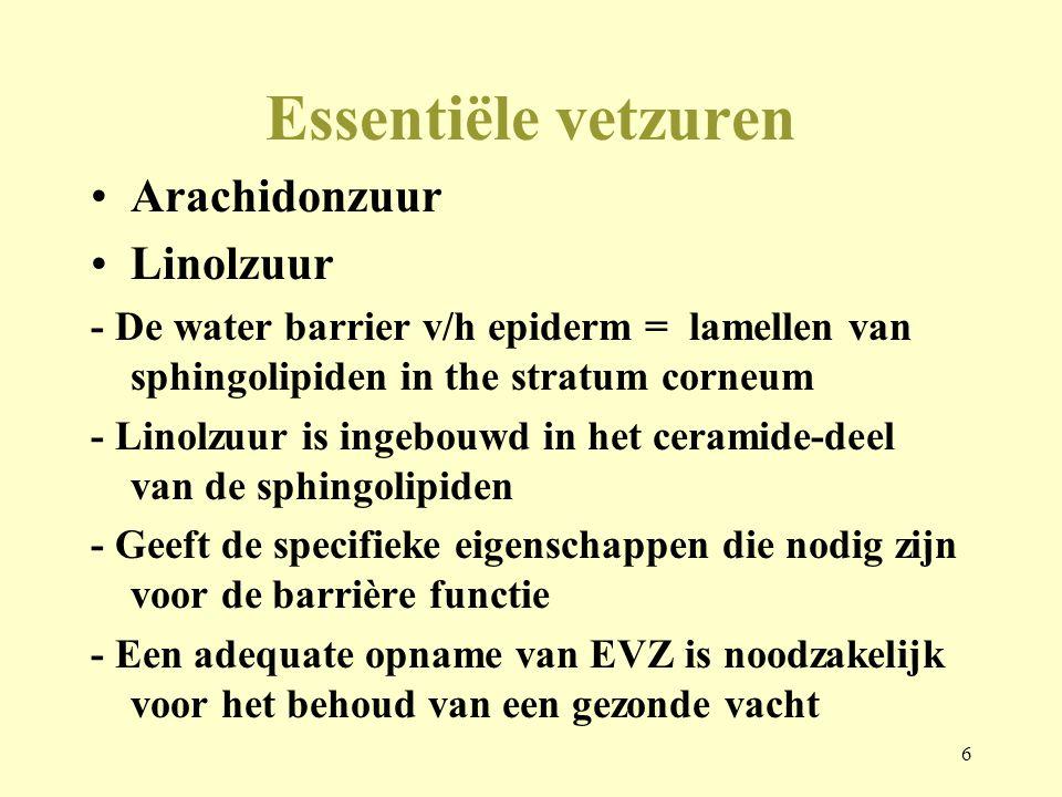 6 Essentiële vetzuren Arachidonzuur Linolzuur - De water barrier v/h epiderm = lamellen van sphingolipiden in the stratum corneum - Linolzuur is ingeb