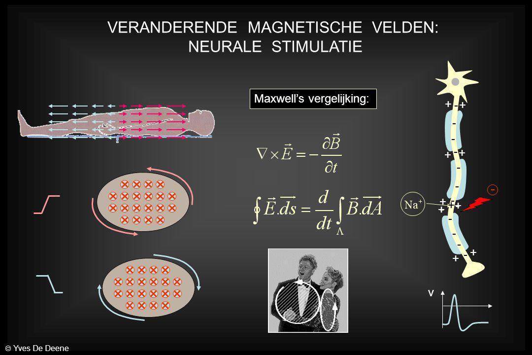 VERANDERENDE MAGNETISCHE VELDEN: NEURALE STIMULATIE Maxwell's vergelijking: + + + + + + + + + - - - - - - - - - - - - v + - -  Yves De Deene