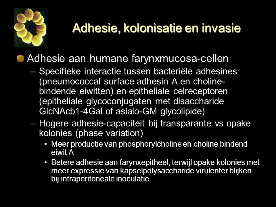 Adhesie, kolonisatie en invasie Adhesie aan humane farynxmucosa-cellen –Specifieke interactie tussen bacteriële adhesines (pneumococcal surface adhesi