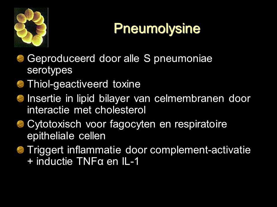 Pneumolysine Geproduceerd door alle S pneumoniae serotypes Thiol-geactiveerd toxine Insertie in lipid bilayer van celmembranen door interactie met cho