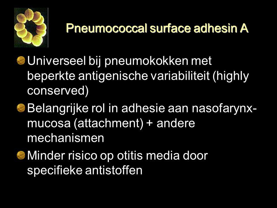 Pneumococcal surface adhesin A Universeel bij pneumokokken met beperkte antigenische variabiliteit (highly conserved) Belangrijke rol in adhesie aan n
