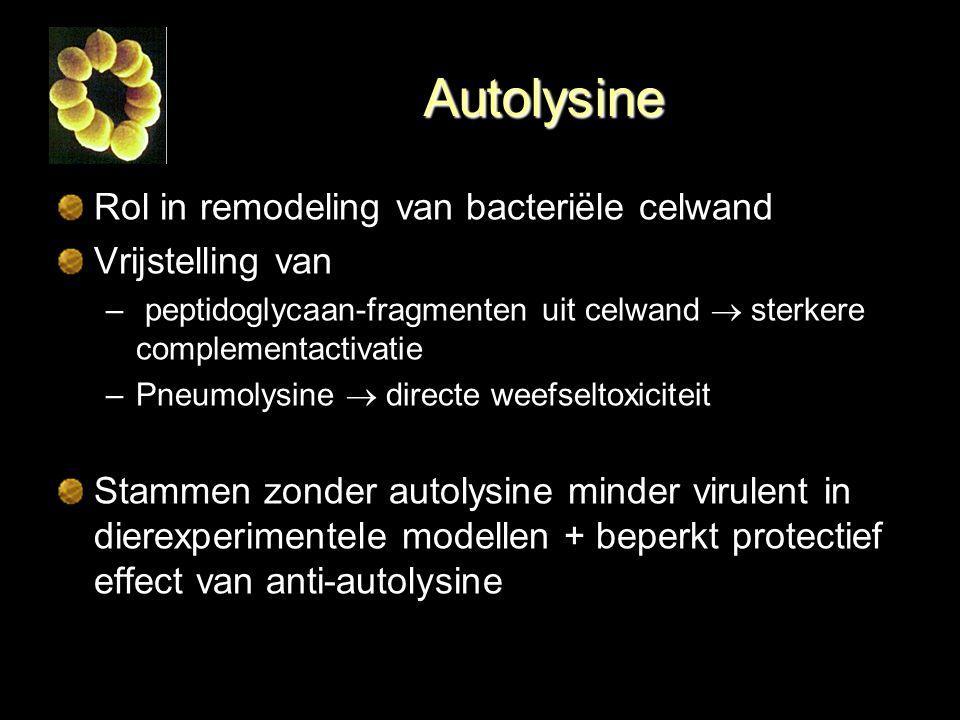 Autolysine Rol in remodeling van bacteriële celwand Vrijstelling van – peptidoglycaan-fragmenten uit celwand  sterkere complementactivatie –Pneumolys