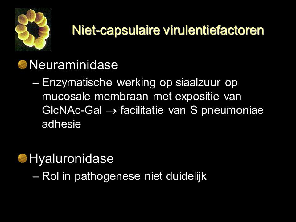 Niet-capsulaire virulentiefactoren Neuraminidase –Enzymatische werking op siaalzuur op mucosale membraan met expositie van GlcNAc-Gal  facilitatie va