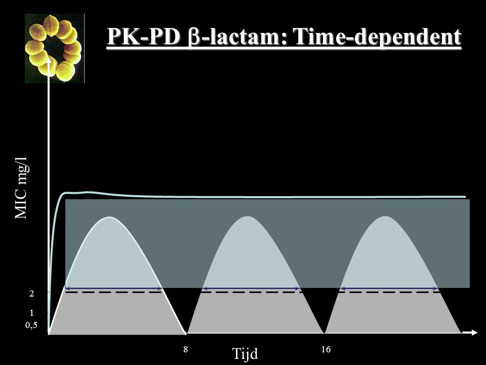 MIC mg/l Tijd 816 2 PK-PD  -lactam: Time-dependent 1 0,5
