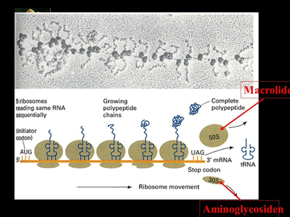 Macrolide Aminoglycosiden