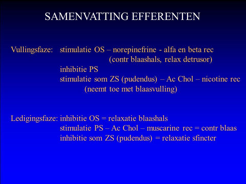 SAMENVATTING EFFERENTEN Vullingsfaze: stimulatie OS – norepinefrine - alfa en beta rec (contr blaashals, relax detrusor) inhibitie PS stimulatie som ZS (pudendus) – Ac Chol – nicotine rec (neemt toe met blaasvulling) Ledigingsfaze:inhibitie OS = relaxatie blaashals stimulatie PS – Ac Chol – muscarine rec = contr blaas inhibitie som ZS (pudendus) = relaxatie sfincter