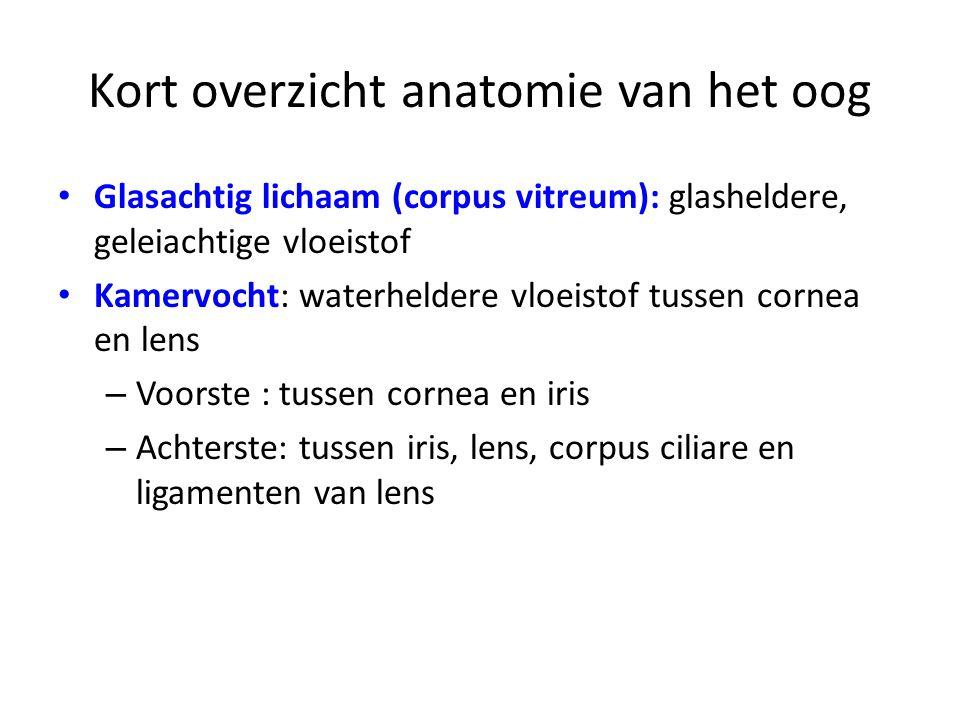 Het oog. - ppt video online download