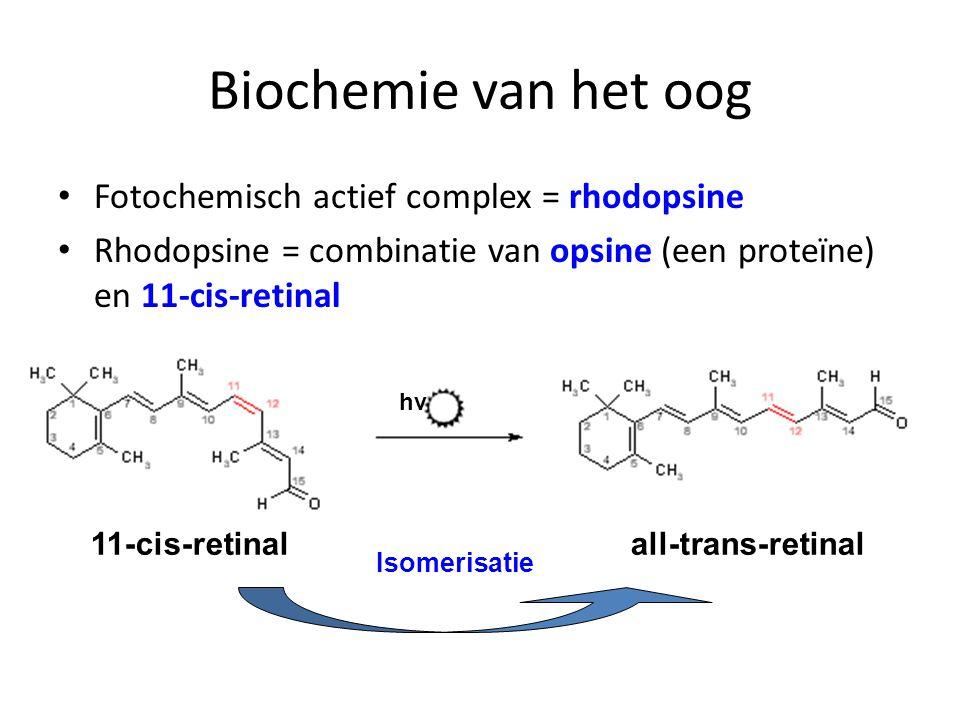 Biochemie van het oog Fotochemisch actief complex = rhodopsine Rhodopsine = combinatie van opsine (een proteïne) en 11-cis-retinal 11-cis-retinal all-