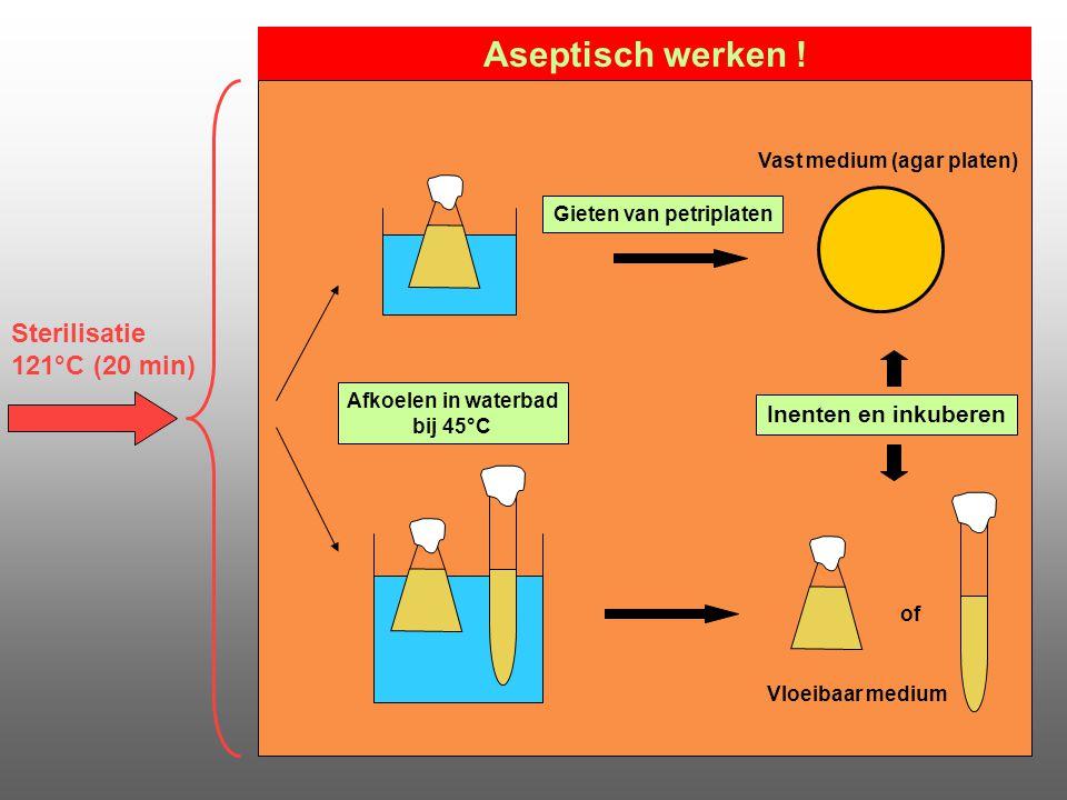 Sterilisatie 121°C (20 min) Inenten en inkuberen of Vloeibaar medium Afkoelen in waterbad bij 45°C Aseptisch werken ! Gieten van petriplaten Vast medi