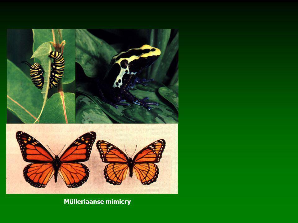 Mülleriaanse mimicry