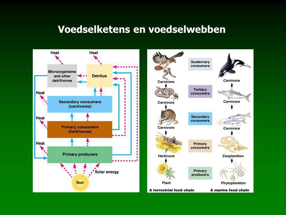 Voedselketens en voedselwebben