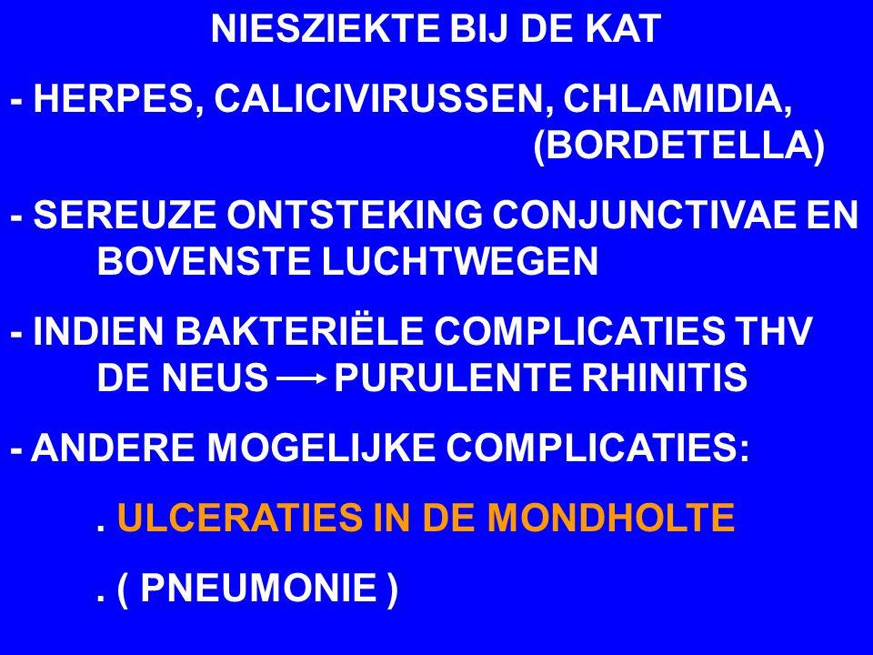NIESZIEKTE BIJ DE KAT - HERPES, CALICIVIRUSSEN, CHLAMIDIA, (BORDETELLA) - SEREUZE ONTSTEKING CONJUNCTIVAE EN BOVENSTE LUCHTWEGEN - INDIEN BAKTERIËLE C