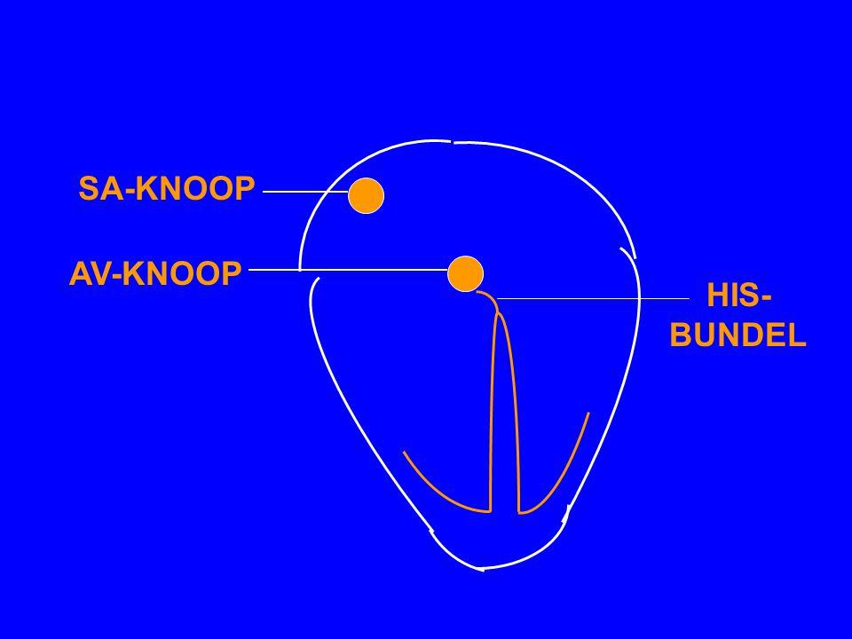 SA-KNOOP AV-KNOOP HIS- BUNDEL