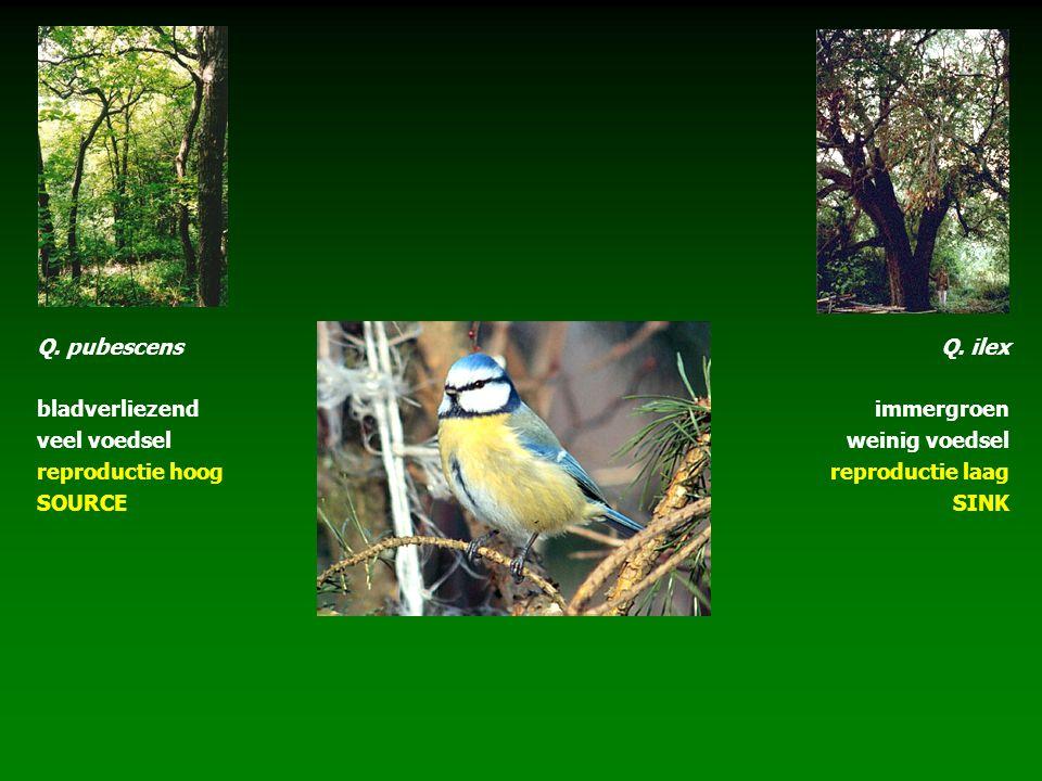 Q. pubescens bladverliezend veel voedsel reproductie hoog SOURCE Q. ilex immergroen weinig voedsel reproductie laag SINK