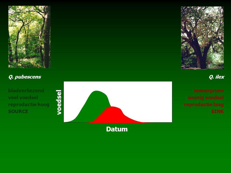 Q. pubescens bladverliezend veel voedsel reproductie hoog SOURCE Q. ilex immergroen weinig voedsel reproductie laag SINK voedsel Datum