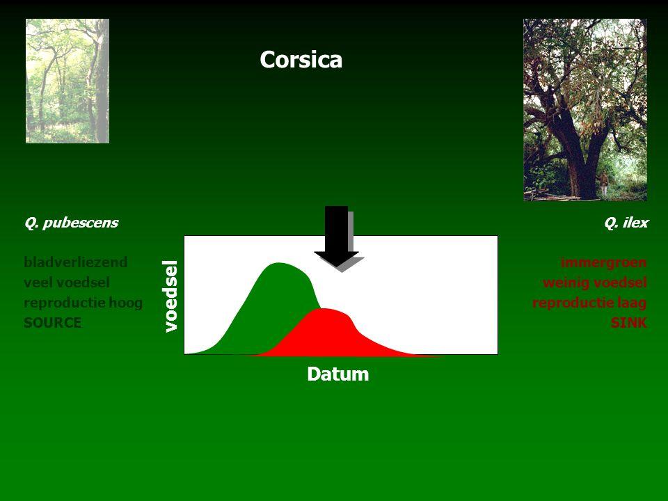 Q. pubescens bladverliezend veel voedsel reproductie hoog SOURCE Q. ilex immergroen weinig voedsel reproductie laag SINK Corsica voedsel