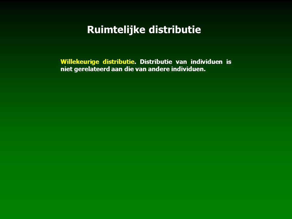 Willekeurige distributie. Distributie van individuen is niet gerelateerd aan die van andere individuen. Ruimtelijke distributie