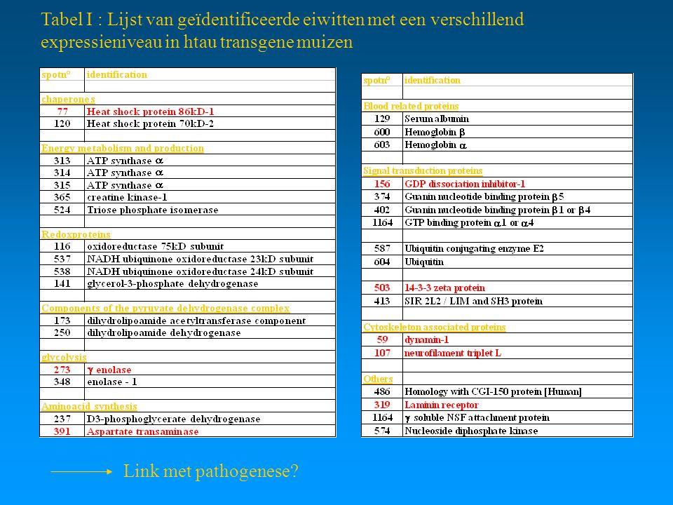 Tabel I : Lijst van geïdentificeerde eiwitten met een verschillend expressieniveau in htau transgene muizen Link met pathogenese?