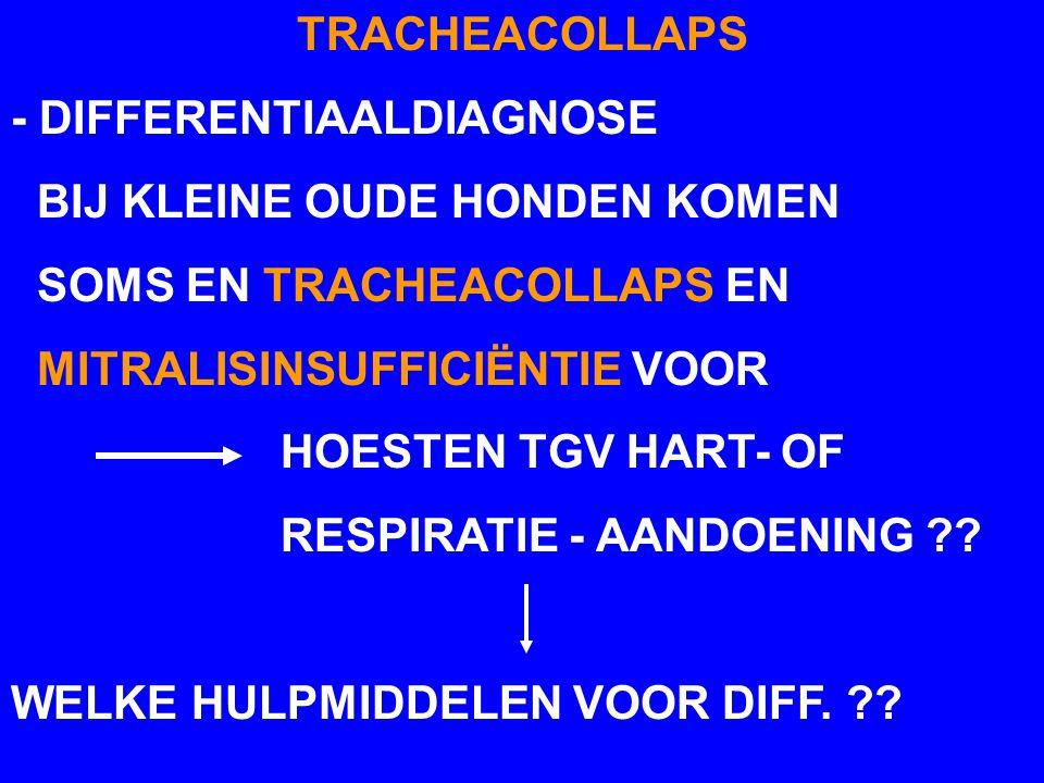 TRACHEACOLLAPS - DIFFERENTIAALDIAGNOSE BIJ KLEINE OUDE HONDEN KOMEN SOMS EN TRACHEACOLLAPS EN MITRALISINSUFFICIËNTIE VOOR HOESTEN TGV HART- OF RESPIRA