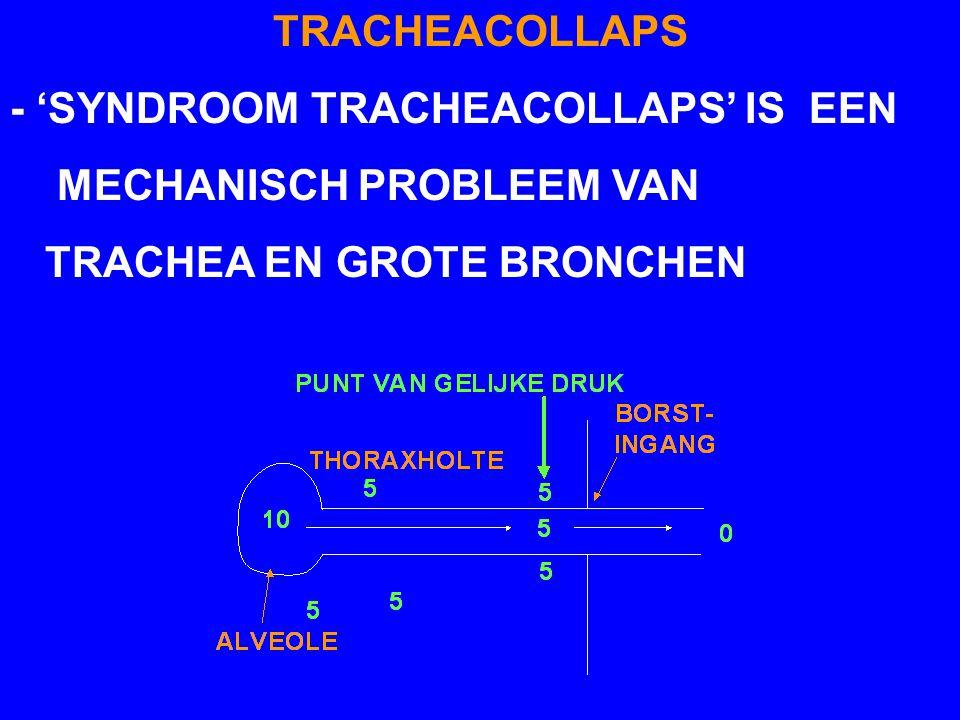 TRACHEACOLLAPS - 'SYNDROOM TRACHEACOLLAPS' IS EEN MECHANISCH PROBLEEM VAN TRACHEA EN GROTE BRONCHEN