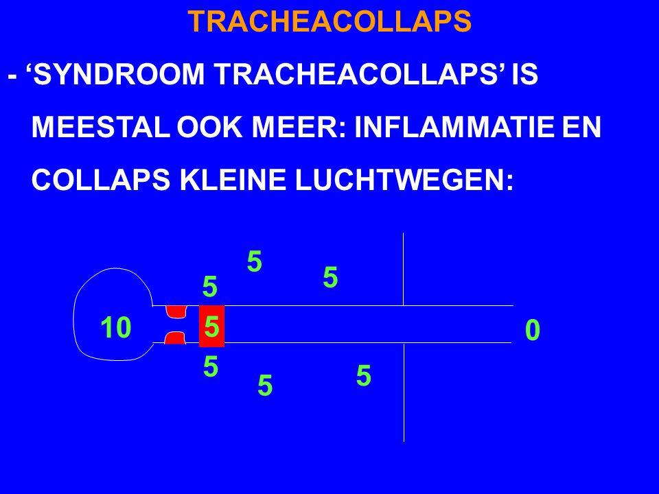 TRACHEACOLLAPS - 'SYNDROOM TRACHEACOLLAPS' IS MEESTAL OOK MEER: INFLAMMATIE EN COLLAPS KLEINE LUCHTWEGEN: 10 5 5 5 5 5 5 0 5