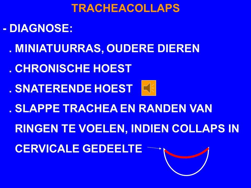 TRACHEACOLLAPS - DIAGNOSE:. MINIATUURRAS, OUDERE DIEREN. CHRONISCHE HOEST. SNATERENDE HOEST. SLAPPE TRACHEA EN RANDEN VAN RINGEN TE VOELEN, INDIEN COL