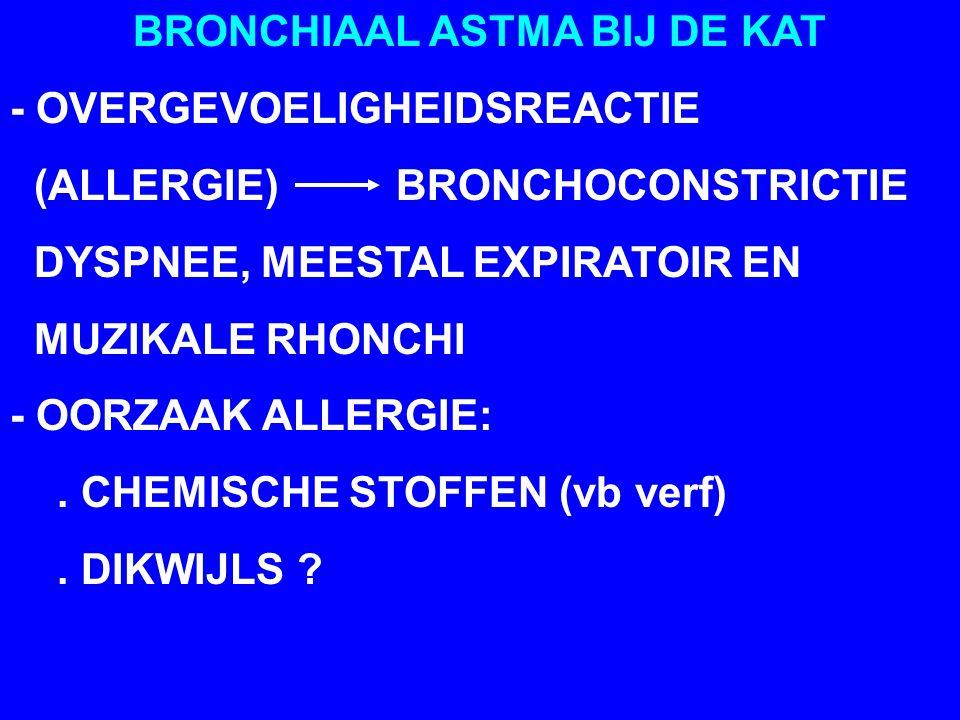 BRONCHIAAL ASTMA BIJ DE KAT - OVERGEVOELIGHEIDSREACTIE (ALLERGIE) BRONCHOCONSTRICTIE DYSPNEE, MEESTAL EXPIRATOIR EN MUZIKALE RHONCHI - OORZAAK ALLERGIE:.